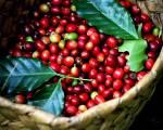Thị trường cà phê châu Á: giá phục hồi tại Việt Nam