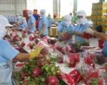 Thay đổi tư duy khi xuất khẩu nông sản vào thị trường Trung Quốc