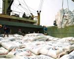 Giá gạo xuất khẩu 6 tháng đầu năm giảm 15% so với cùng kỳ
