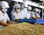 Xuất khẩu hạt điều: lượng tăng, nhưng giá trị sụt giảm