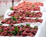 Những điều cần biết khi xuất khẩu trái cây sang Trung Quốc