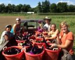 Trang trại đô thị: trồng trọt và trồng người!