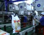 Nhu cầu yếu khiến giá gạo của Ấn Độ và Việt Nam đi xuống