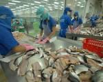 Giá cá tra nguyên liệu giảm chạm đáy