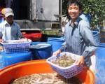 Xuất khẩu tôm khởi sắc vào những tháng cuối năm