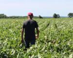 Trung Quốc nhập khẩu 600.000 tấn đậu nành của Mỹ