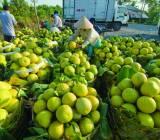 Xuất khẩu qua trung gian, nhiều nông sản Việt Nam bị đội giá gần gấp 2 lần