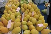Xoài Việt Nam lần đầu tiên vào Mỹ và diễn biến thị trường xoài thế giới