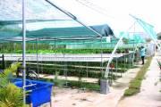 [Video] Cần Thơ Farm – điểm đến cho người tiêu dùng thông thái