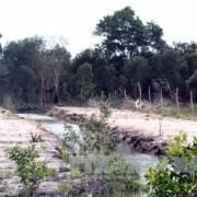 Kiên Giang tạm dừng cho thuê môi trường rừng trên đảo Phú Quốc