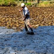 Đối phó đại hạn mặn Kiên Giang giảm lúa – tôm, tăng nuôi thủy sản