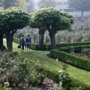 Sống gần nhiều cây xanh, phụ nữ sống lâu hơn