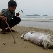 Cá biển, đất và dân nghèo
