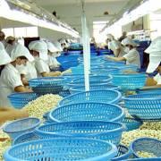 'Cứ hai hạt điều mà người Mỹ ăn, có một hạt điều mua từ VN'