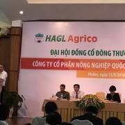 HAGL: 'Cây đa ngành' phát triển từ ngọn
