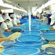 Xuất khẩu 'tỷ đô', ngành điều vẫn lo vì phụ thuộc nguyên liệu nhập khẩu