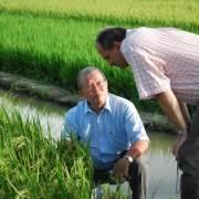 Đi học trồng lúa, học giỏi rồi, nhưng… hành?