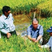 Hãy gạt bỏ tự ái dân tộc đi, và học người Campuchia làm gạo