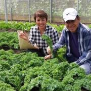 Người Singapore trồng rau hữu cơ ở ngoại ô Đà Lạt