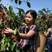 Cà phê hòa tan Việt tìm cách chinh phục thị trường ASEAN