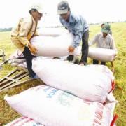 Lúa gạo ùn ứ, vẫn muốn tăng sản lượng?