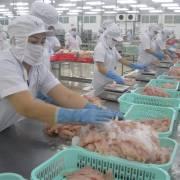 VASEP: Không có chuyện Mỹ áp thuế chung cho doanh nghiệp cá tra