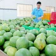Nông nghiệp: Thu hút doanh nghiệp theo kiểu 'ngứa đầu gãi tai'