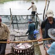 VASEP: Trung Quốc đang đẩy mạnh nuôi cá tra