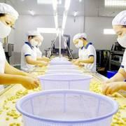Giá điều thô các nước tăng ảnh hưởng đến xuất khẩu điều của Việt Nam