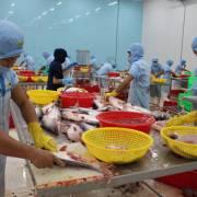 VASEP sẽ kiện vụ Mỹ áp đặt thuế chống bán phá giá cá tra
