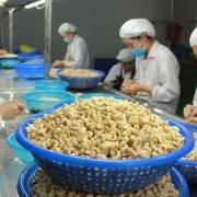 Xuất khẩu hạt điều trong 4 tháng đầu năm đã mang về hơn 1 tỉ USD