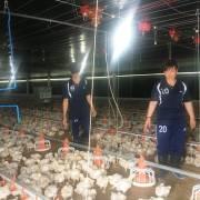 Trại gà ông Kha đạt chất lượng toàn cầu