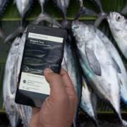 Cách mạng sản xuất thực phẩm qua blockchain