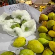 Kohitur, giống xoài 'vua' ở Tây Bengal