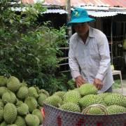 Đẩy mạnh xuất khẩu trái cây Việt Nam sang thị trường Trung Quốc