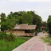 Tanjung Puting, rừng xưa đã khép?