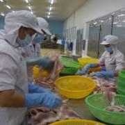 Thuế xuất khẩu cá tra vào Mỹ lần đầu giảm