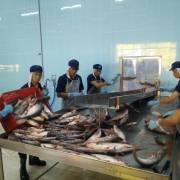 Lo vỡ trận, Bộ Nông nghiệp yêu cầu giám sát chặt nuôi cá tra