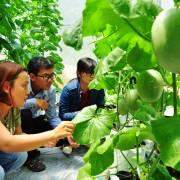 Khởi nghiệp xanh: rau quả sạch miền viễn biên
