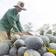 8 loại trái cây Việt Nam được cấp phép xuất khẩu vào Trung Quốc