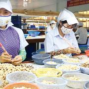 Xuất khẩu 3,52 tỷ USD, điều Việt Nam đứng số 1 thế giới năm 2018
