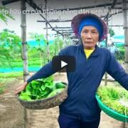 [Video] Nông nghiệp hữu cơ của những nông dân sinh thái Hội An