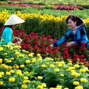 Cách tính mới của dân trồng hoa miền Tây