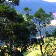 Nắng xuân trong truyện ngắn Võ Hồng