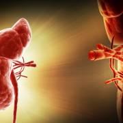 Tín hiệu vui từ cuộc chiến chống thiếu tạng ghép
