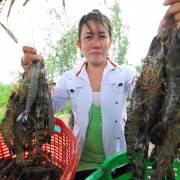 'Lộc' cho chăn nuôi, thuỷ sản năm mới
