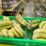 Thaco bao tiêu cây ăn trái cho Hoàng Anh Gia Lai