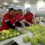 Mỹ chính thức mở cửa cho trái xoài Việt Nam