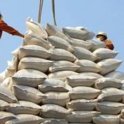 Việt Nam dự kiến xuất khẩu 6 triệu tấn gạo năm 2019