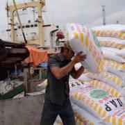 Hơn 330.000 tấn phân bón được nhập khẩu về Việt Nam trong tháng 2